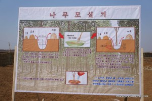 Instructions for how to plant and tend to trees. Photo credits: Russian embassy in Pyongyang.